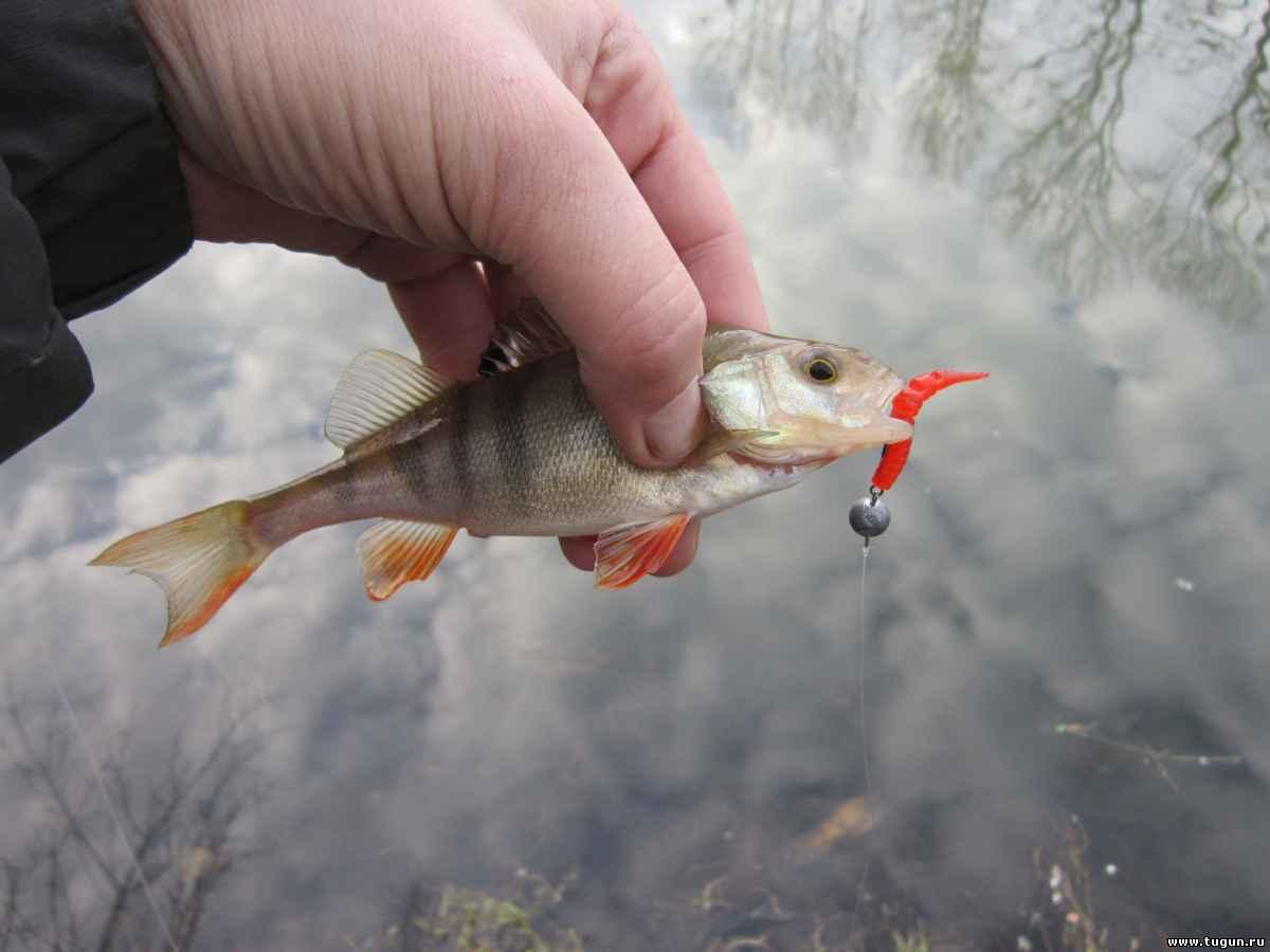 матки: тугун рыболовный сайт красноярска форум прелесть