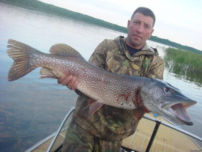 Рыбалка в красноярске на щуку