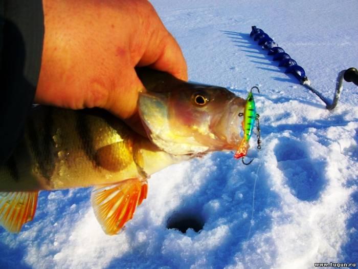 Зимняя рыбалка на балансир окуня
