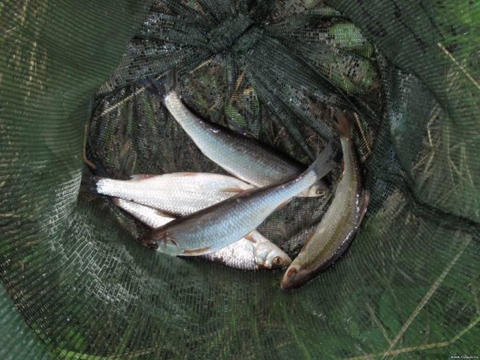 10 Ужасающих рыбубийц  БУГАГА