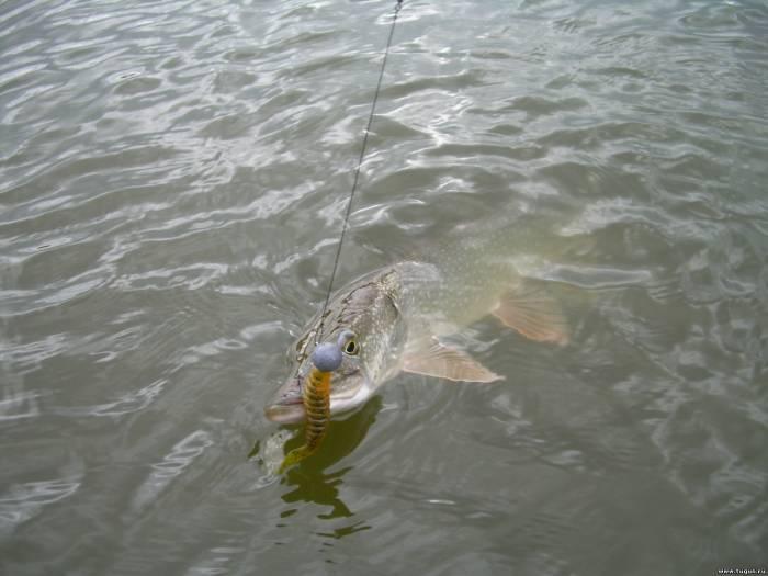 Рыбалка как ловить на что клюет приманки прикормка и