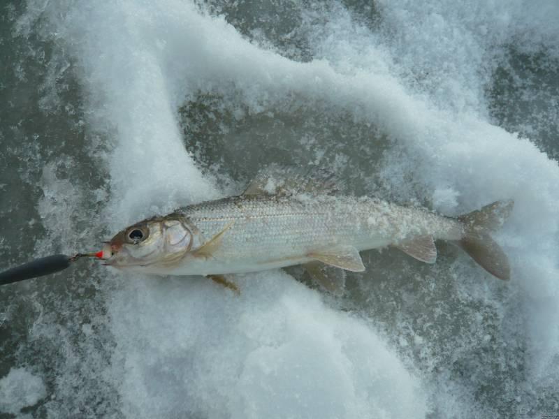 Ловля хариуса зимой на малых реках приманки