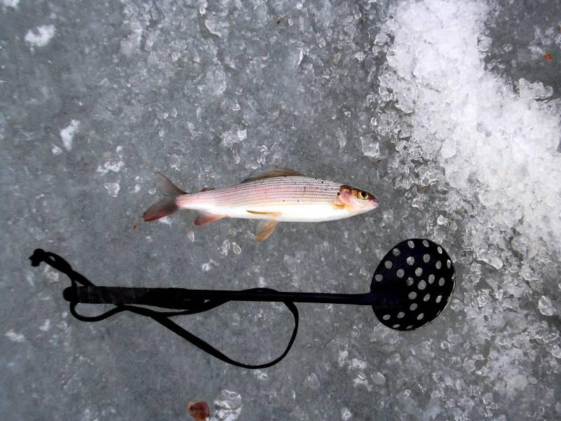 Зимняя рыбалка на енисее хариус