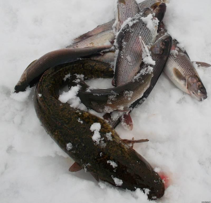 Рыбалка форум на е1 отчеты