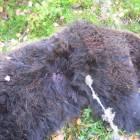 Охота на медведя.......Дядин-Сибиряк.