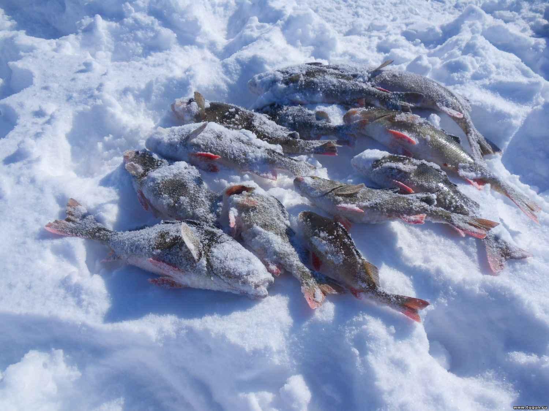 Рыбалка на севере 2015 форум